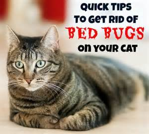 how to get rid of cats in your yard tips to get rid of bed bugs on your cat