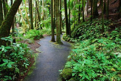 hawaii tropical botanical garden hawaii tropical botanical garden big island of hawaii