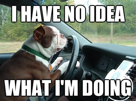 collection  funny driving quotes  car memes shear