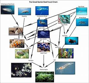 Great White Shark Food Chain
