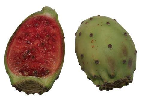 Svekrvin jezik kaktus opuncija indijska smokva - Sadnja