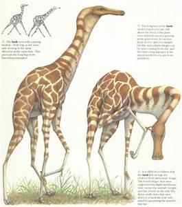 Future Evolution Of Animals | www.pixshark.com - Images ...