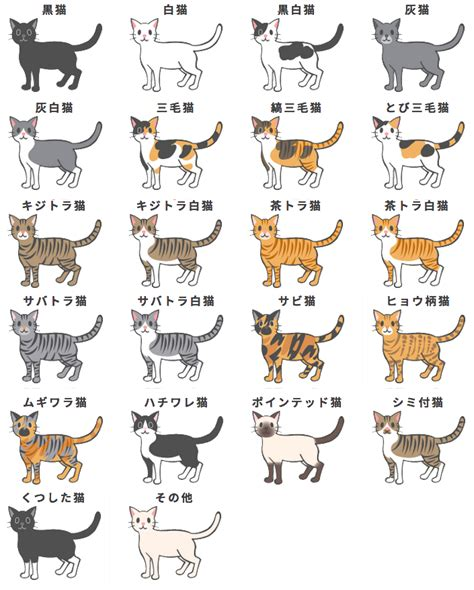 cat colors i made this cat colour chart using the images nihongogogo
