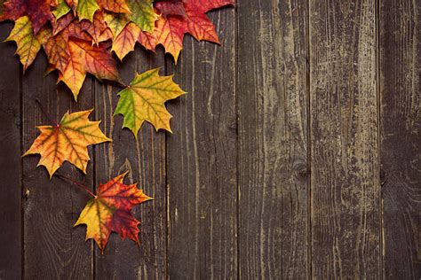 Autumn Leaves Fall Backgrounds Powerpoint by Autumn Background Background Check All