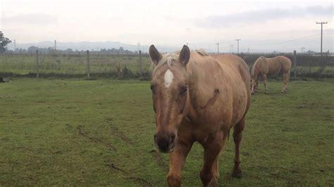 horse horses dangerous sexist kicking rearing behavior horsemanship gore rick herd
