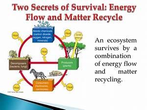 Biogeochemical Cycles  Environmental Science