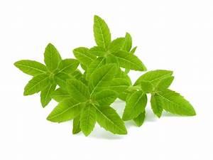 Verveine Plante Tisane : tisane verveine odorante bio 20 sachets romon nature ~ Mglfilm.com Idées de Décoration