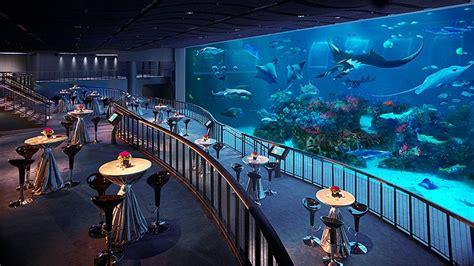 s e a aquarium mice singapore