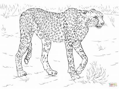 Animal Coloring Pages Realistic Printable Jungle Animals
