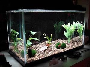 Aquarium Decoration Ideas - Android Apps on Google Play