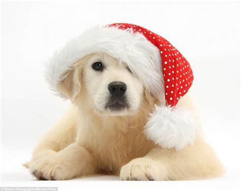photographer mark taylor captures pets christmas dress up