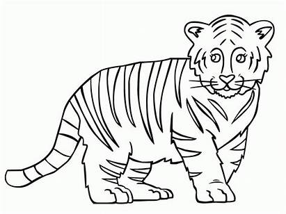 Tiger Coloring Outline Easy Clipart Template Drawing