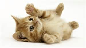 baby cats for baby cats hd wallpaper animals wallpapers