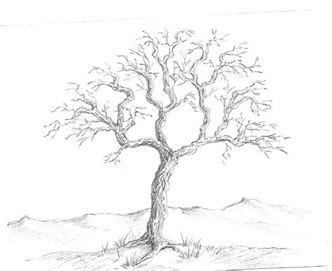 Simple Pencil Drawing Of A Tree