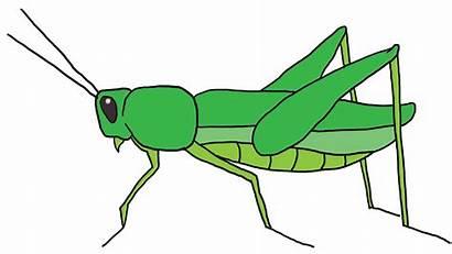 Grasshopper Draw Wikihow