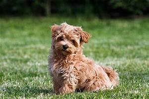Anti Allergie Hund : hunde f r allergiker darauf sollten sie achten ~ Orissabook.com Haus und Dekorationen