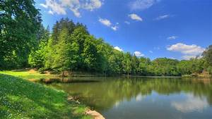 Wallpapers Scenery Hd Water Tree Nature 1920x1080 ...