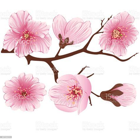 Ilustración de Elemento De La Rama De La Flor De La Sakura