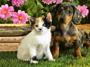 Pictures Of Cute Dog And Cats Together Catfactsblog