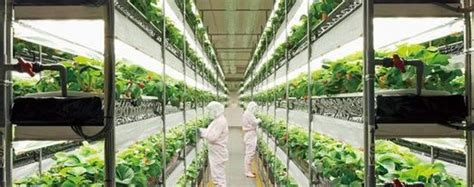 vertical farming plant factory market shares
