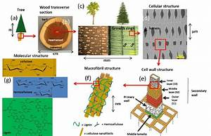 Cell Wall Polymers U0026 39  Structure In Trees From Tree To