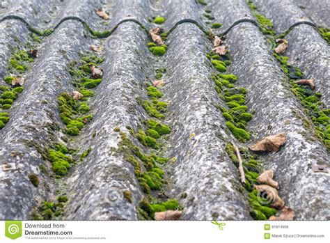 Moss On Roof Stock Photo Dryer Vent For Roof Venting Shed Metal Panel Sizes Red In Pa Roofing Shingle Calculator Online Installation Max Rib Stay Dry