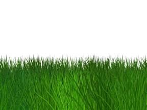 Transparent Grass Border