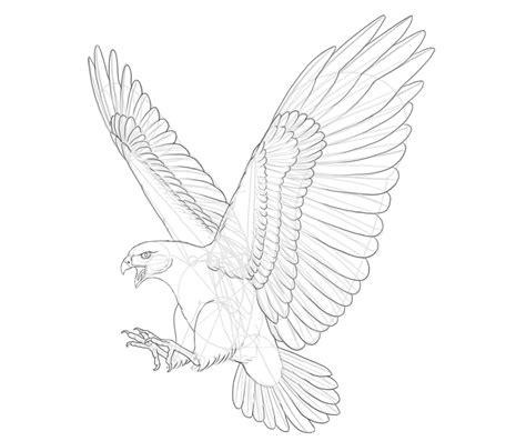 draw  hawk