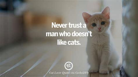 cute cat images  quotes  crazy cat ladies