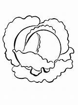 Cabbage Coloring Pages Printable Vegetables Recommended sketch template