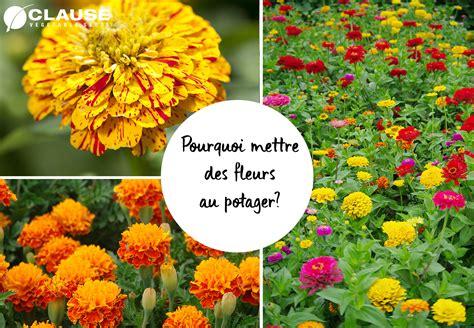 les fleurs utiles au potager clause home garden