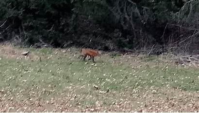 Fox Yard
