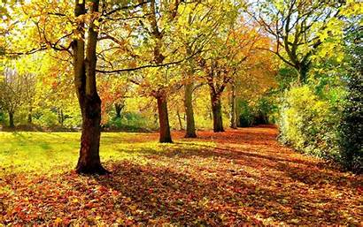 Autumn Trees Landscape Leaves Nature Leaf Forest