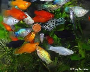 Freshwater Aquarium Fish Food