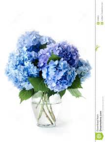 white hydrangea bouquet blue hydrangeas stock image image 9796661