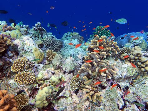 Coral Reef Finance: An Essential Investment | by Wildlife Conservation Society | Our Ocean, Our ...