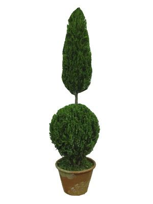 Ball Cone Topiary 50″ shown – Preserved Interiors