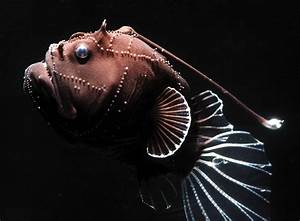 UH... LOOK @ The PICTURES of The Most Bizarre Deep-Sea ...