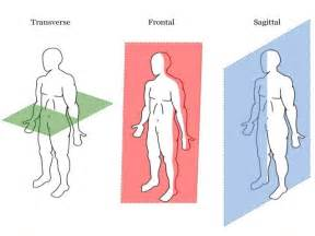As Ocr Anatomy  U0026 Physiology Entire Powerpoint  New Spec