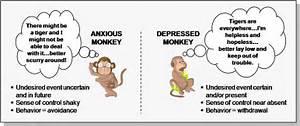 Anxiety Vs Depression Pictures  Citalopram Adolescent depression