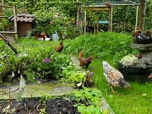 Hühner Im Garten : mein h hner garten ein garten f r h hner sebrights und schwedische blumenh hner foto bild ~ Markanthonyermac.com Haus und Dekorationen