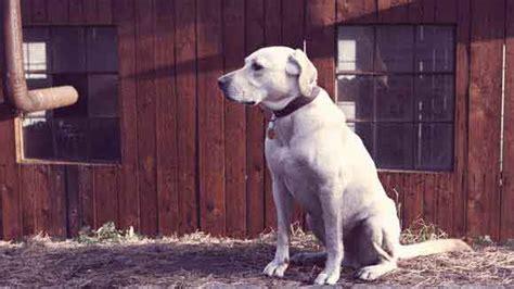 caring  senior dogs petcarerx