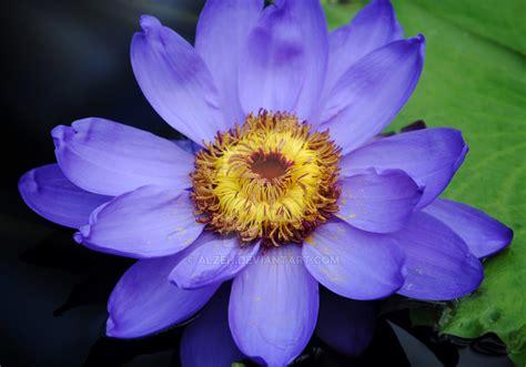flower at kew gardens by alzeh on deviantart