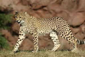 Secondary Consumers Animals | www.pixshark.com - Images ...