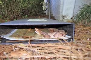 Cahaba Snake Traps