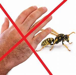 Wann Verlassen Wespen Ihr Nest : 70 wespennest entfernen bonn eckel bloggt uber wespen schwarz gelbe untermieter wespennester ~ A.2002-acura-tl-radio.info Haus und Dekorationen