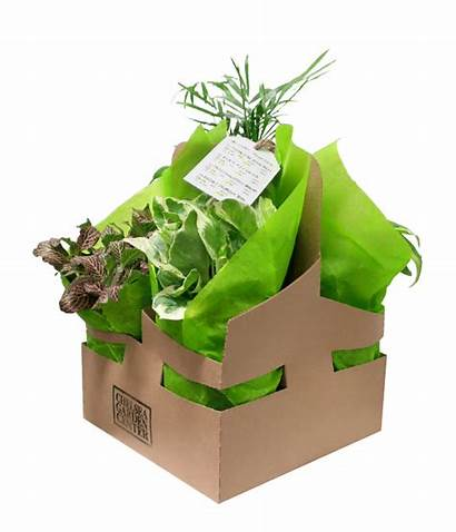 Plant Pack Low Plants Care Gift Easy