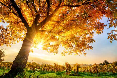 Schöner Garten Im Herbst by Coming In Autumn To Montpellier Institut Europeen De