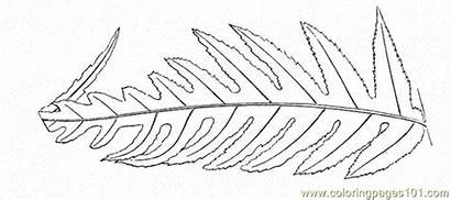 Fern Coloring Pages Leaf Coloringpages101 Huge Trees