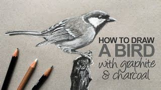 How to Draw a Cartoon Bird   How to Draw a Toucan   Draw